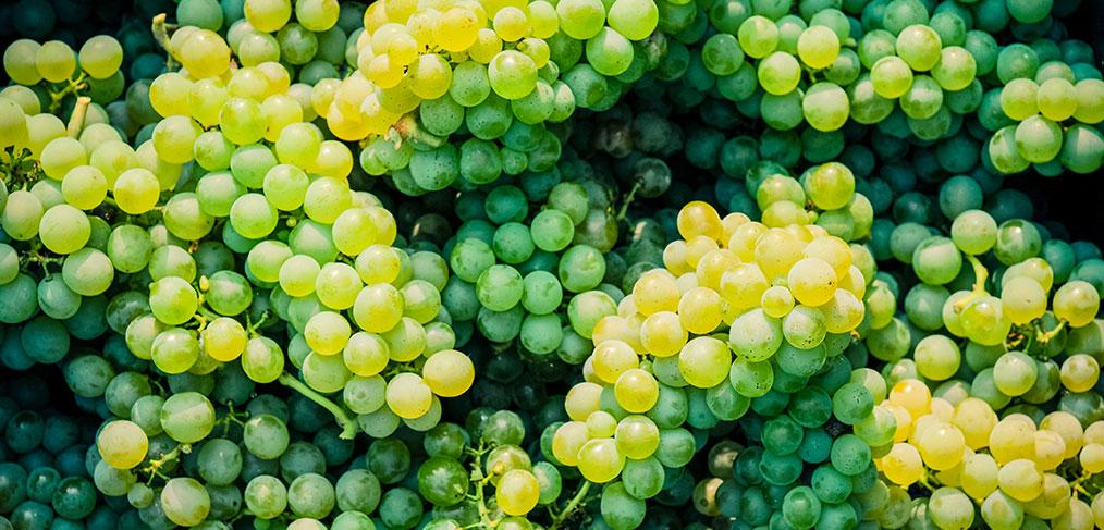grappoli di uva arneis