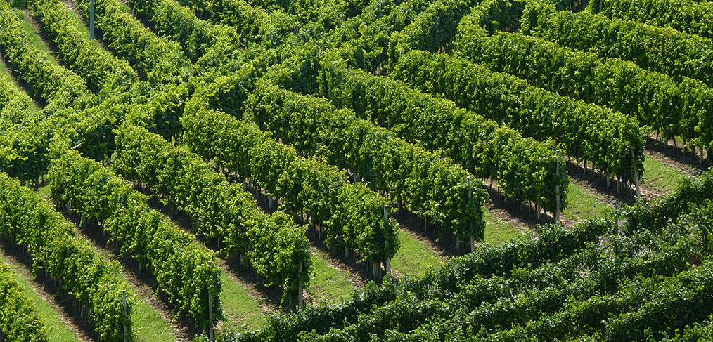 le vigne di baldissero d'alba