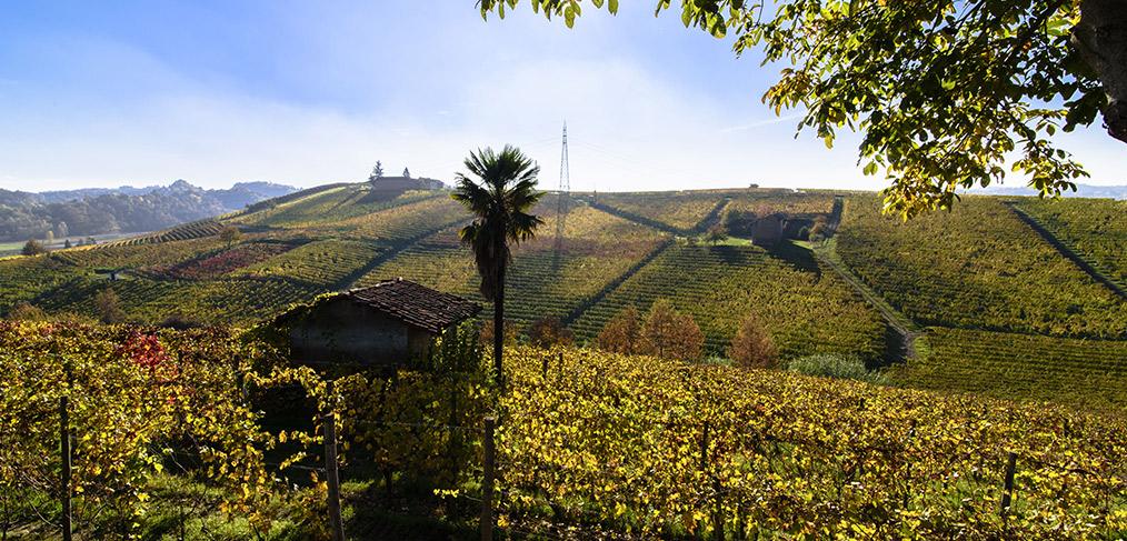 panorama sulle colline e le vigne della zona